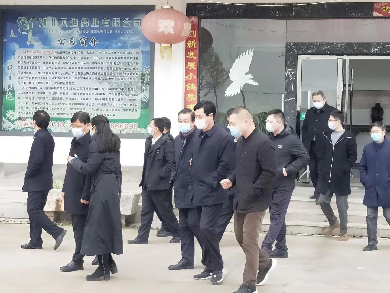 热烈欢迎襄阳市领导一行莅临贝迪鸽业视察调研